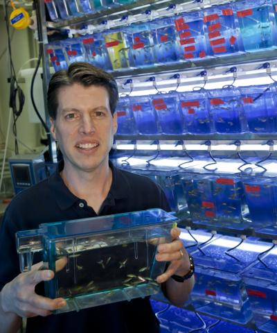 Clarkson University Associate Professor of Biology Kenneth Wallace showcases his subjects of study -- zebrafish -- a common aquarium fish who share more than 70 percent of their genes with humans.