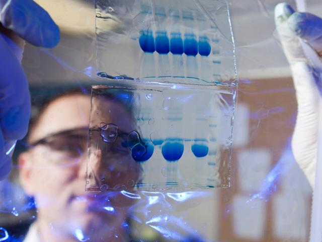 Student examining research in a lab