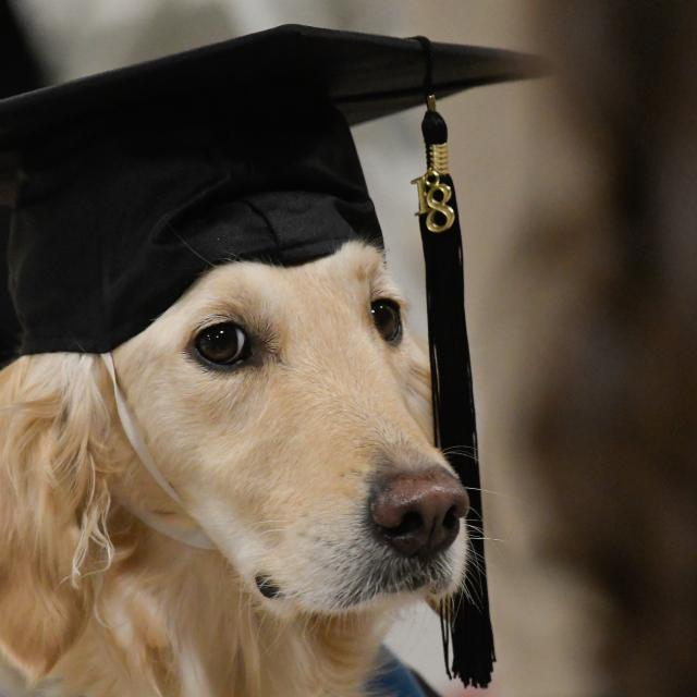 Clarkson University Gives Dog Honorary Degree