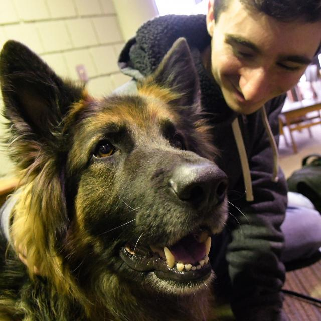 Clarkson Uses Therapy Dogs To Ease Exam Stress